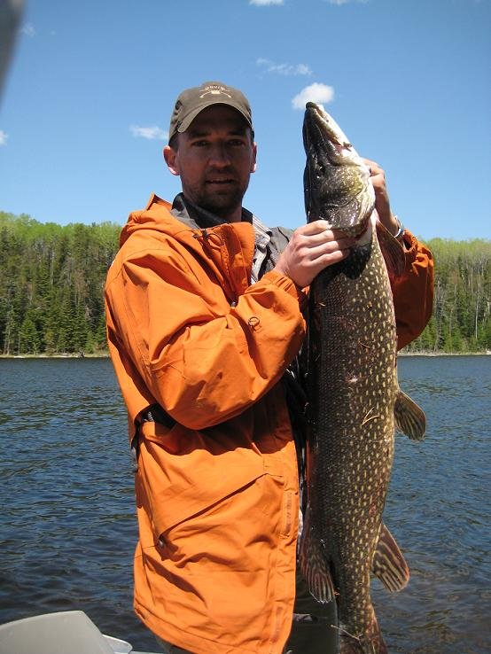 Moose Horn 42 inch Pike
