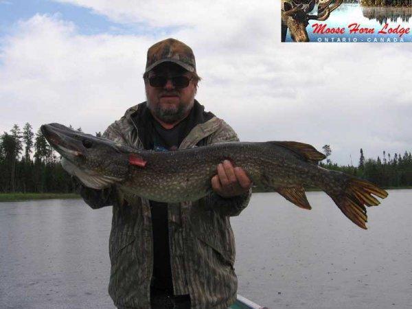 Moose Horn Lodge Trophy Northern