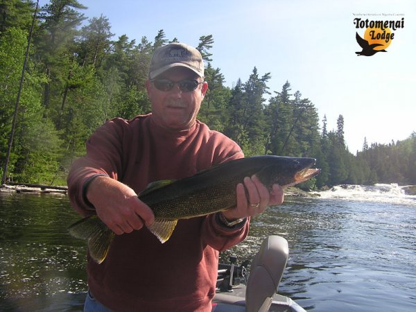 Awesome Walleye Fishing  At Totomenai Lodge