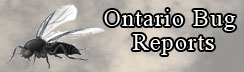 Ontario Bug Reports