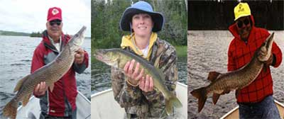 Trophy Fly In Fishing Northern Pike, Walleye and Musky